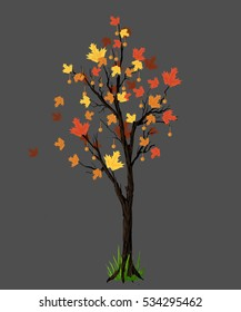 tree in the autumn isolated