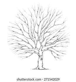 Tree with big tree crown