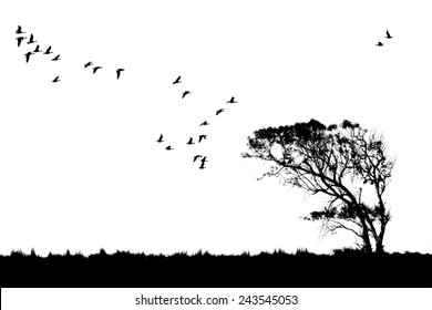 Tree and birds silhouette