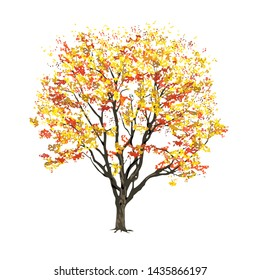Tree with foliage in the fall, the color raster image on a white background