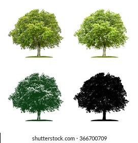 Tree in four different illustration techniques - Walnut tree