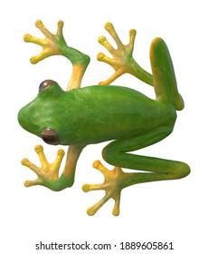 Tree Frog On Tree Pose 3D illustration on white background
