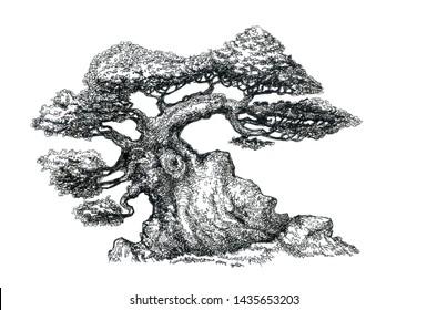 The tree of life. Bonsai, a symbol of wisdom.