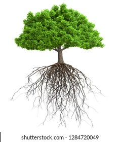 tree with roots isolated 3D illustration