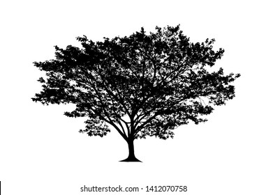 tree silhouette for brush on white background