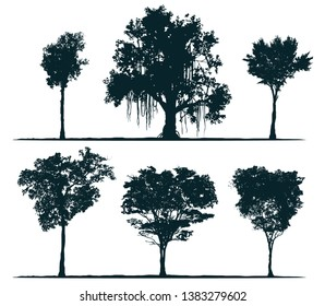 Tree silhouettes - pau brasil tree, banyan tree, rosewood tree, acacia. Set of different south trees.