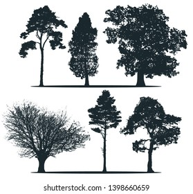Tree silhouettes - Sweden pine, Poplar, Alder, Maple, Scots pine, Cedar. Set of different trees.