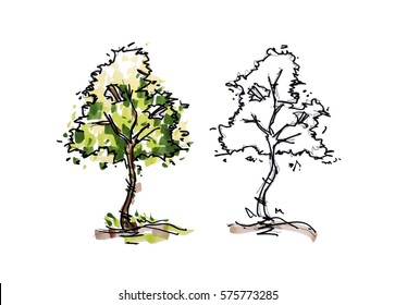 Tree sketching for landscape design in drawing style. Isolated on white background with clipping path.