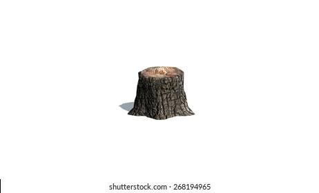 tree stump on a white background