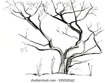Tree without Leaves hand drawn ink sketch. Isolated.