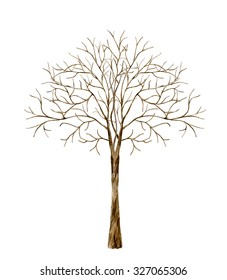 Tree without leaves. Watercolor illustration on a white background