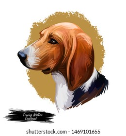 Treeing Walker Coonhound or Tennessee Lead dog breed portrait isolated. Digital art illustration, watercolor drawing of hand drawn doggy. Pet has tricolor coat, white with black and tan markings.