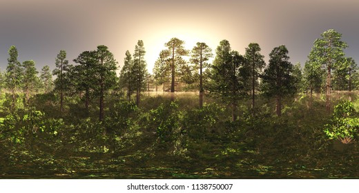 Trees in the fog. Environment map. HDRI map. equidistant projection. Spherical panorama. landscape 3D rendering