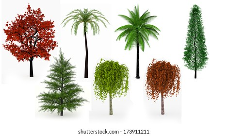 Lot of trees palms, leafy and coniferous isolated on white background