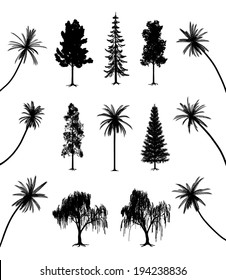 Trees with roots and palms