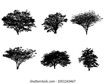 trees silhouette for brush in Photoshop.