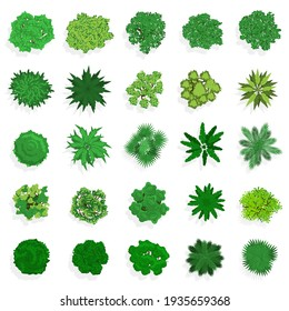 Trees top view. Green plants, bushes, shrubs and trees for landscape or architectural design. Nature green spaces  illustration set
