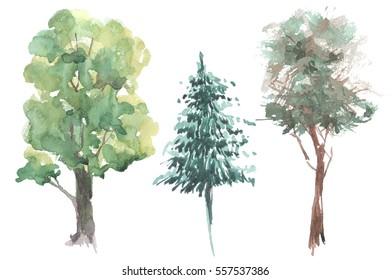Trees watercolor illustration