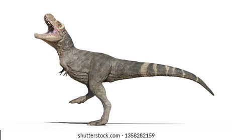T-Rex Dinosaur, Tyrannosaurus Rex reptile walking, prehistoric Jurassic animal isolated on white background, 3D illustration