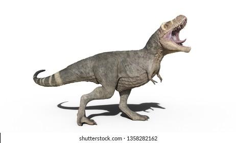 T-Rex Dinosaur, Tyrannosaurus Rex reptile roaring, prehistoric Jurassic animal isolated on white background, 3D illustration