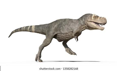 T-Rex Dinosaurier, Tyrannosaurus Rex Reptilienlauf, prähistorisches Jurassistisch einzeln auf weißem Hintergrund, 3D-Illustration