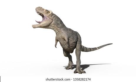 T-Rex Dinosaur, Tyrannosaurus Rex reptile roars, prehistoric Jurassic animal isolated on white background, 3D illustration