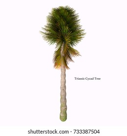 Triassic Cycad Tree with Font 3d illustration - Cycad are seed plants with a long fossil history that were more abundant and more diverse than they are today.