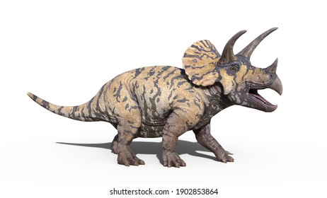 Triceratops, dinosaur reptile roaring, prehistoric Jurassic animal isolated on white background, 3D illustration