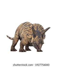 Triceratops dinosaur from view with mouth open. 3D illustration isolated on white background.