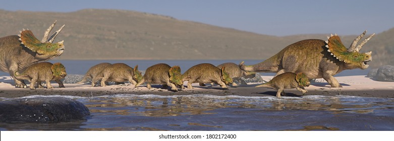 Triceratops horridus family on the beach, dinosaurs from the Cretaceous in peaceful landscape (3d paleoart rendering banner)