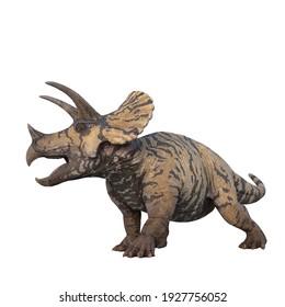 Triceratops large herbivorous dinosaur. 3D illustration isolated on white background.