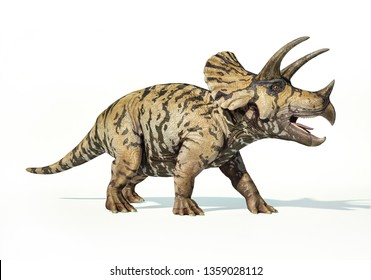 Triceratops photo realistic 3d rendering on white background.