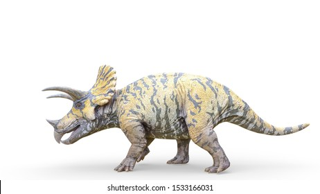 triceratops is walking on white background, 3d illustration