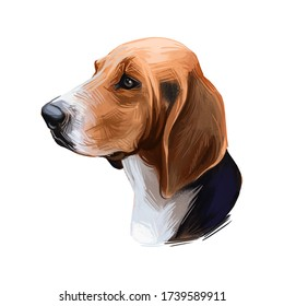 Trigg Hound Puppy isolated digital art illustration. Hand drawn dog muzzle portrait, puppy cute pet. Dog breeds originating from United States. American English Foxhound, bred to hunt foxes by scent