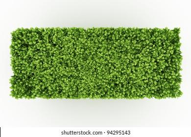 trimed shrub fence isolated on white