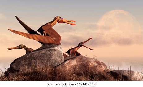 A trio of anhanguerii rest on a grassy, rock covered hill at the edge of the sea. One of the pterosaurs squawks at the full moon that is just rising over the horizon over the ocean. 3D Rendering