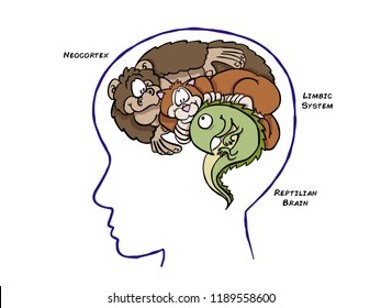 The triune theory of the brain is inspired on darwinian evolution. It includes the stem or reptilian brain, the limbic system or mammal brain, and the neocortex.