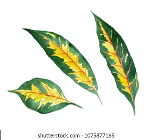tropic leaves green and yellow, watercolor illustration