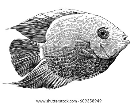 Tropical Aquarium Fish Isolated On White Stock Illustration