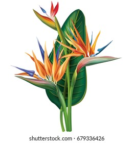 Tropical arrangement with Strelitzia flowers. Raster version