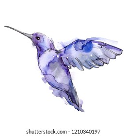 Tropical bird colibri in a wildlife by watercolor style isolated. Wild freedom, bird with a flying wings. Aquarelle bird for background, texture, pattern, frame, border or tattoo.