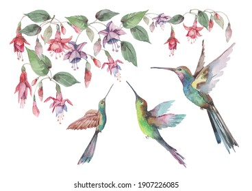 Tropical birds hummingbirds in flight with spread wings, pink fuchsia flowers and buds with green leaves. Watercolor hand drawn illustration set for design of cards, invitations, print, background