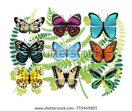 tropical butterflies species bright colors various stock