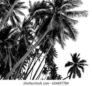 Tropical coconut palm trees isolated on white background. Black and white illustration