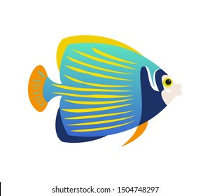Tropical Emperor angelfish on white background.
