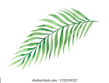 Tropical exotic palm leaf for design of wallpaper, textile, background, prints. Watercolor.