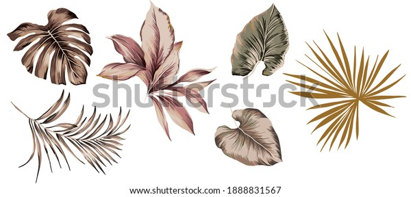 Tropical exotic set isolated leaves leaf for seamless pattern repeated texture, with plants, monstera leaf, palm and banana leaves vintage antique. White color background.