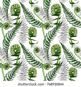 Tropical fern leaves pattern in a watercolor style. Aquarelle wild flower for background, texture, wrapper pattern, frame or border.