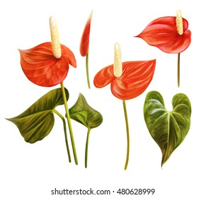 Tropical floral set. Anthurium, flamingo flower, tailflower.  Botanical handmade painting illustration, tropical flowers, leaves. Watercolor red flowers isolated on white background.