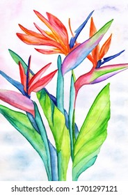 Tropical flower strelitzia watercolor painting